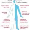 Прогноз жизни после ишемического и геморрагического инсульта