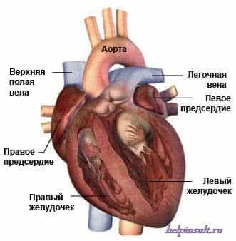 Синусовая аритмия сердца-определение и симптомы