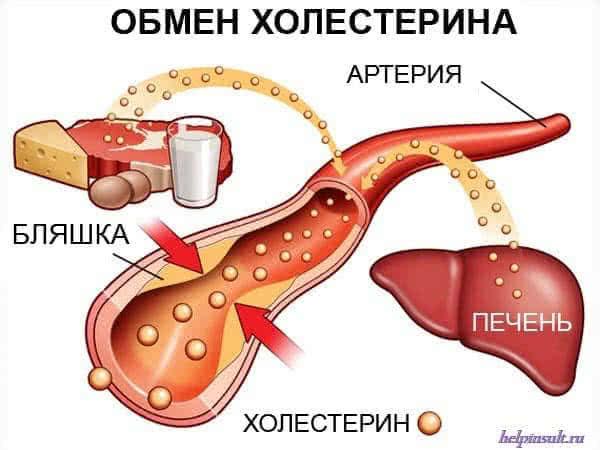 Нормализовать уровень холестерина:какие методы могут помочь