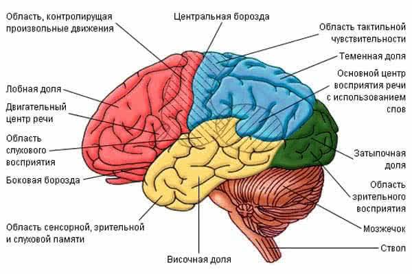 Последствия и прогноз инсульта мозжечка и ствола головного мозга