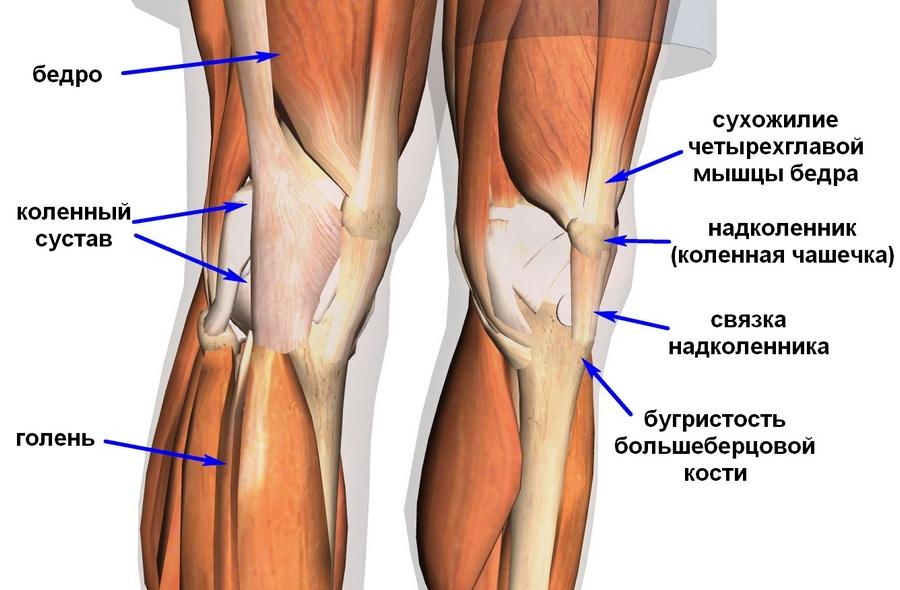 расположения связок ноги