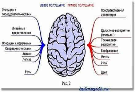 Функции головного мозга человека
