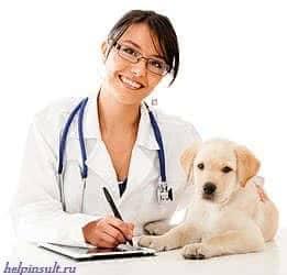 Лечение животными людей