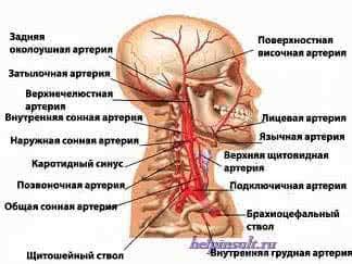 Артерия шеи и инсульт