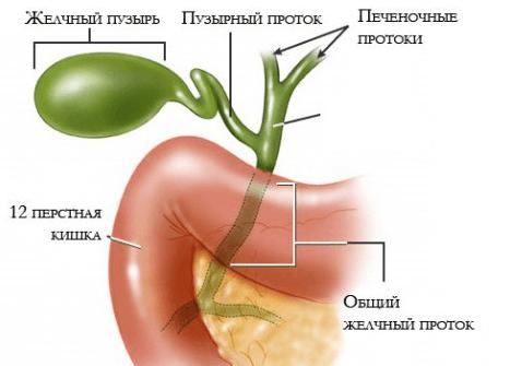 Что такое холангит, его причины и признаки