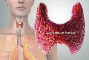 Sh-thyroid-02