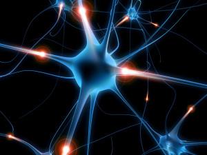 sedalishhnyj-nerv